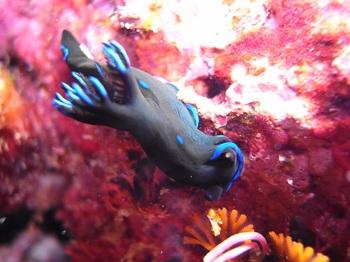 20140713_sea_slug.jpg
