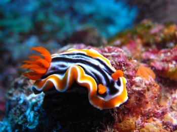 20140805_sea_slug_1.jpg