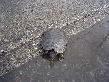 20141009_02_turtle.JPG