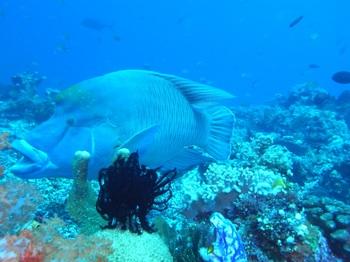 20141106_napoleonfish.jpg