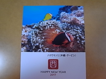 20180118_tomato_anemonefish_1.JPG