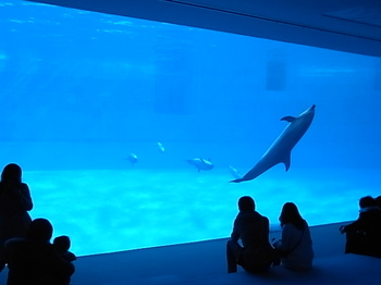 20111231_nagoya_port_aquarium_1.JPG