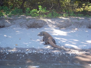 20130224_komodo_dragon_1.jpg