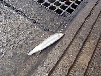 20141009_01_river_fish.JPG