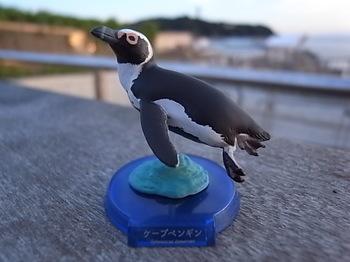 20180825_01_african_penguin.JPG